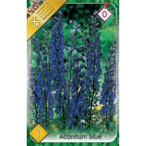 Aconitum blue - Sisakvirág