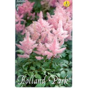 Astilbe x arendsii - Gyöngyvessző (rózsaszín)