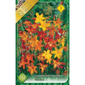 Crocosmia - Kisvirágú kerti sáfrányfű (színkeverék)