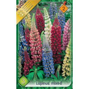 Lupinus - Csillagfürt (színkeverék)