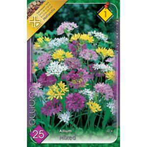 Allium - Sziklakerti díszhagyma (színkeverék)