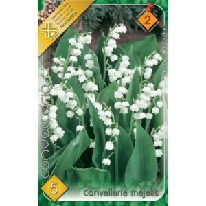 Convallaria majalis - Gyöngyvirág