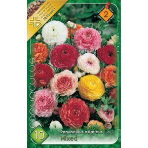 Ranunculus asiaticus - Ázsiai boglárka (színkeverék)