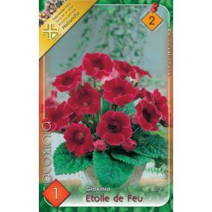 Gloxínia 'Etoile de Feu' - Csuporka (piros)