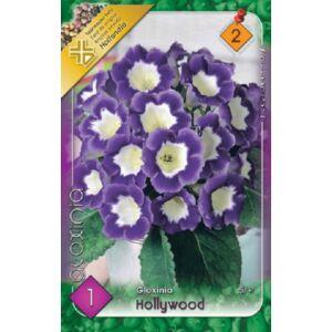 Gloxínia 'Hollywood' - Csuporka (fehér/lila)