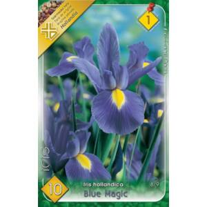 Iris hollandica 'Blue Magic' - Holland írisz (kék/lila)