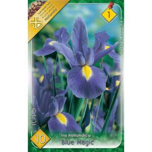 Iris hollandica 'Blue Magic' - Holland írisz (kék/lila)