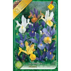Iris hollandica - Holland írisz (színkeverék)