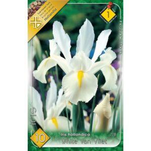Iris hollandica 'White van Vliet' - Holland írisz (fehér)