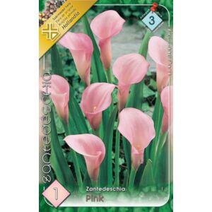 Zantedeschia - Kála (rózsaszín)