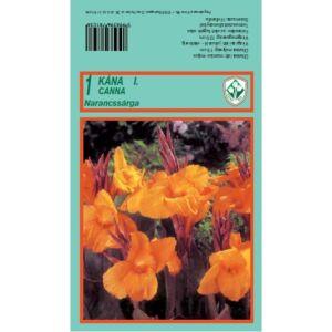 Canna - Kána (narancssárga)