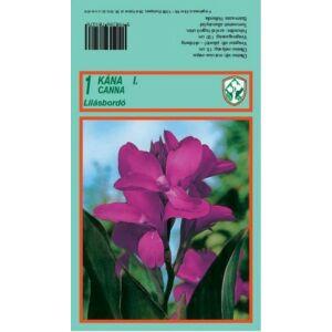 Canna - Kána (lilás bordó)
