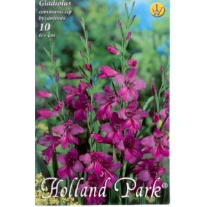 Gladiolus communis ssp. byzantinus - Bizánci kardvirág