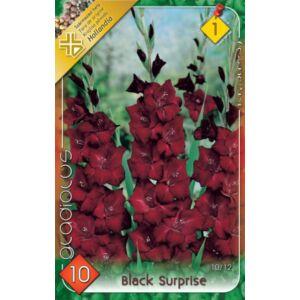 Kardvirág – Gladiolus 'Black Surprise' (sötétbordó)
