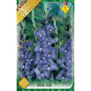 Kardvirág – Gladiolus 'Blue Isle' (kék)