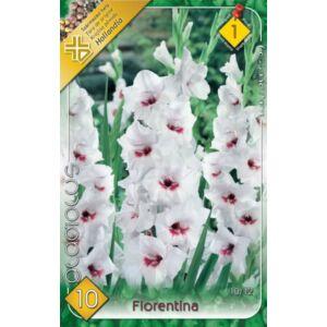 Kardvirág – Gladiolus 'Fiorentina' (fehér, rózsaszín torokkal)