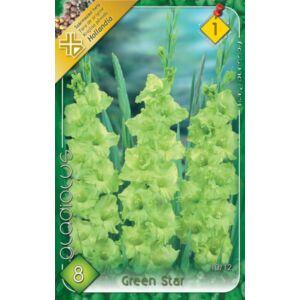 Kardvirág – Gladiolus 'Green Star' (zöld)