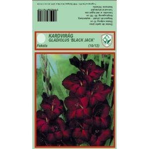 Kardvirág – Gladiolus 'Black Jack' (fekete)