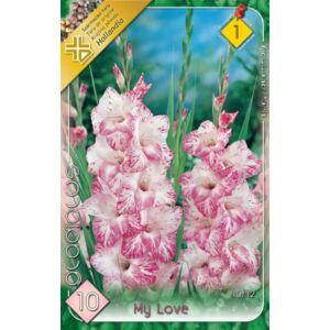 Kardvirág – Gladiolus 'My Love' (rózsaszín cirmos)