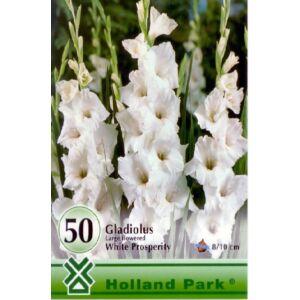 Kardvirág nagycsomag - Gladiolus Fehér