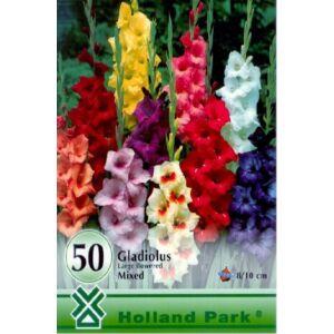 Kardvirág nagycsomag - Gladiolus Színkeverék