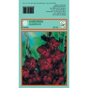 Kardvirág nagycsomag - Gladiolus Fekete