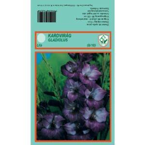 Kardvirág nagycsomag - Gladiolus Lila