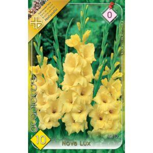 Kardvirág – Gladiolus 'Nova Lux' (citromsárga)