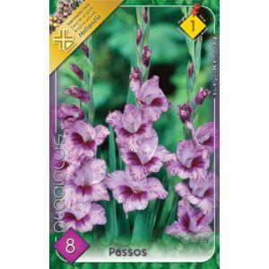 Kardvirág – Gladiolus 'Passos' (világos-/sötétlila cirmos)