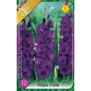 Kardvirág – Gladiolus 'Purple Flora' (sötétlila)