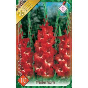Kardvirág – Gladiolus 'Traderhorn' (piros, fehér torokkal)