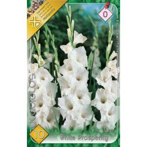 Kardvirág – Gladiolus 'White Prosperity' (fehér, fodros)