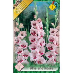 Kardvirág – Gladiolus 'Wine and Roses' (rózsaszín, bordó torokkal)
