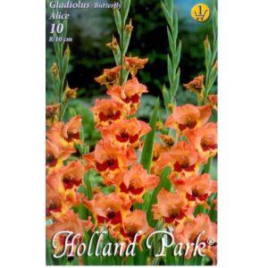 Kardvirág – Gladiolus 'Alice' (sárga, narancssárga, piros torokkal)
