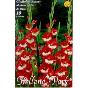 Kardvirág – Gladiolus 'Mademoiselle de Paris' (élénkpiros/fehér)