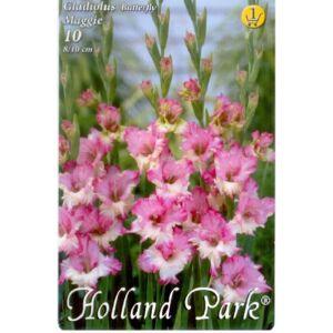 Kardvirág – Gladiolus 'Maggie' (lilás-rózsaszín/fehér)