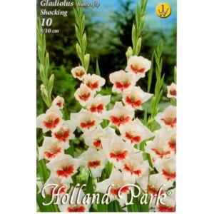 Kardvirág – Gladiolus 'Shocking' (fehér, narancspiros torokkal)