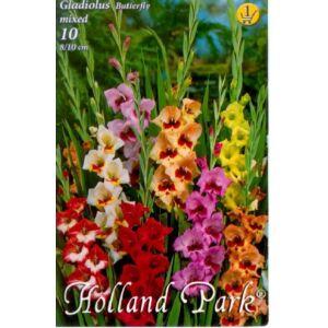 Kardvirág – Gladiolus pillangóvirágú színkeverék