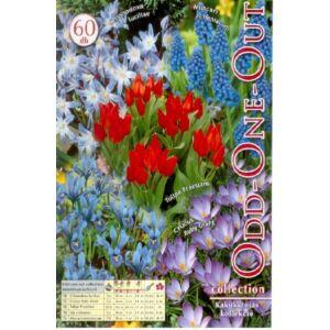 Odd-one-out - Kakukktojás (színes balkon virághagyma kollekció)