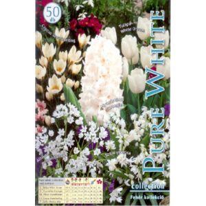 Fehér (tavaszi virághagyma kollekció)