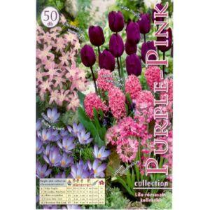 Lila-rózsaszín (lila és rózsaszín virághagyma kollekció)