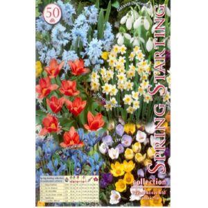 Spring Starting - Tavaszköszöntő (színes tavaszi virághagyma kollekció)