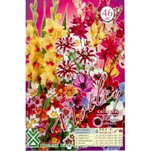 Tarkabarka (sokszínű virághagyma kollekció)