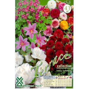 Terasz (balkonra ültethető virághagyma kollekció)