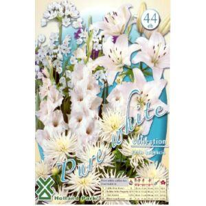 Tiszta fehér (csak fehér színű virághagyma kollekció)