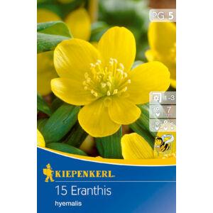 Eranthis hyemalis – Téltemető