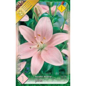 Lilium Asiatic pink - Ázsiai liliom (rózsaszín)