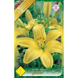 Lilium Asiatic yellow - Ázsiai liliom (sárga)