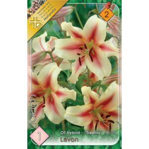 Lilium 'Lavon' - Óriásvirágú liliom (sárgásfehér/rózsaszín)