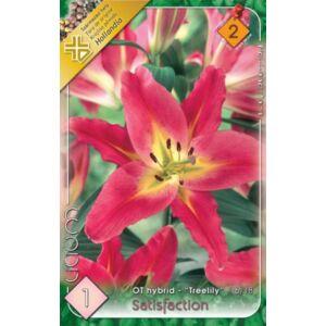 Lilium 'Satisfaction' - Óriásvirágú liliom (sárga/sötét rózsaszín)